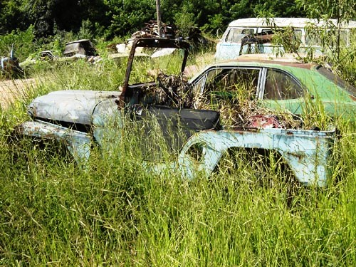 jeep1 Willys Jeep, dupla em meio à relva!