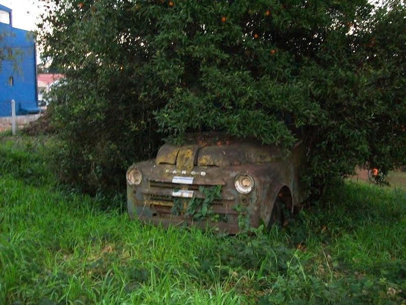 udiego-carvalho-ponta-grossa Dodge Fargo